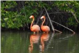 safari en los manglares