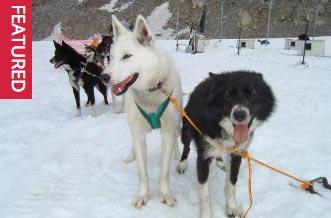 trineo perros glaciares